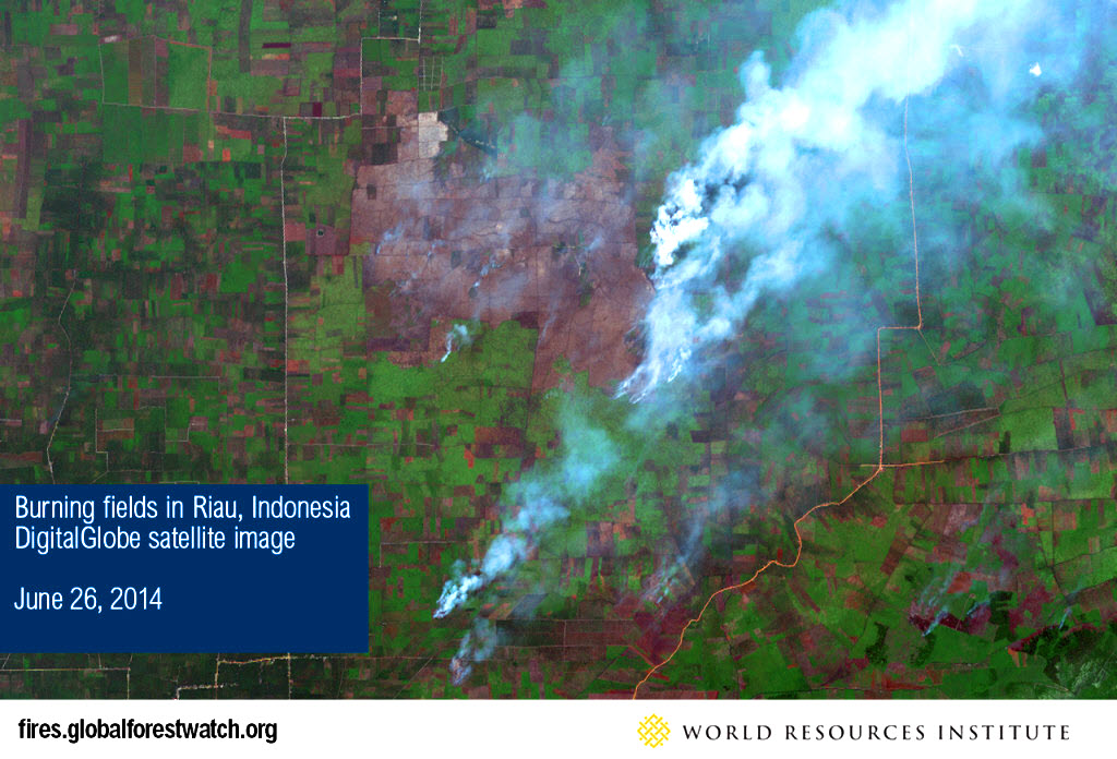 Global Forest Watch Fires
