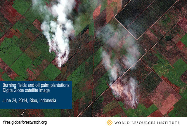 Burning fields and oil palm plantations