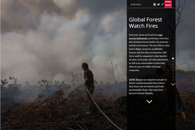 Global Forest Watch Fires Story Map