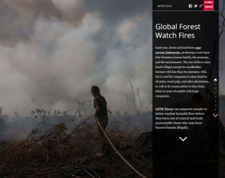 Global Forest Watch Fires Story Map – An Inside Look
