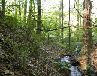 Explore Natural Communities On Your Next Hike