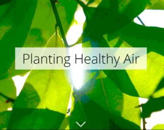 TNC Story Map: Planting Healthy Air