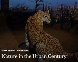 Habitat and biodiversity in the 'Urban Century'