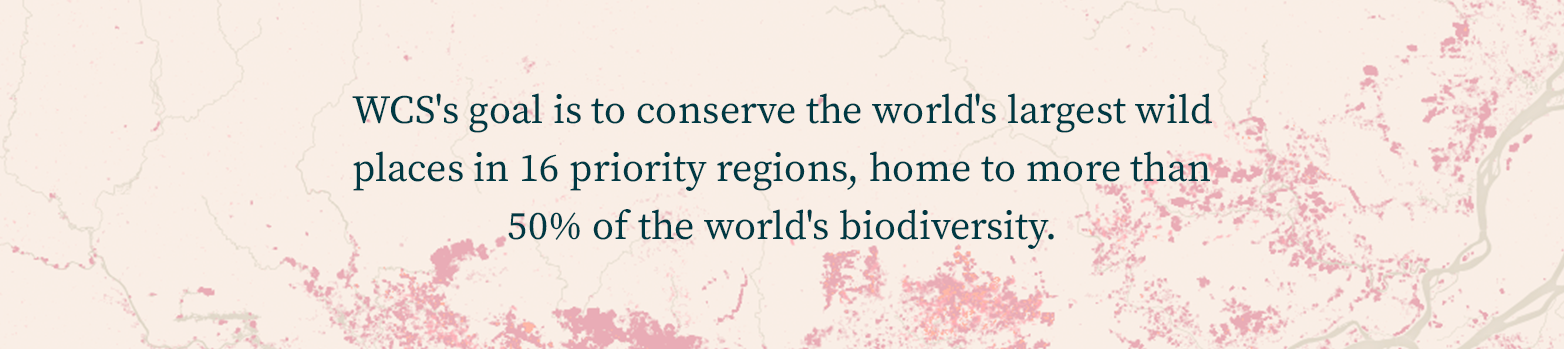 WCS' goal is to conserve the world's largest wild places in 16 priority regions, home to more than 50% of the world's biodiversity.