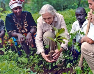 Jane's Green Hope: Blue Raster supports 87 Years of Jane Goodall's Impact
